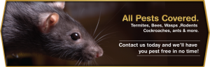 Rats-Pests-Slide