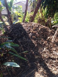 Brush Turkey Removal Gold Coast