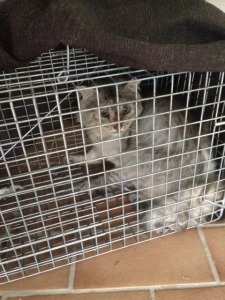 Cat Removal - Benowa Gold Coast
