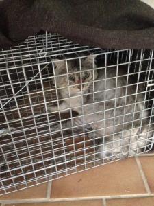 Cat Removal - Benowa Gold Coast