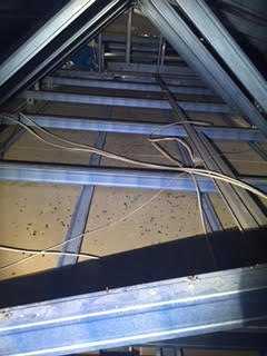Rat droppings in roof Southport Gold Coast